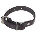 Puppy Collar -